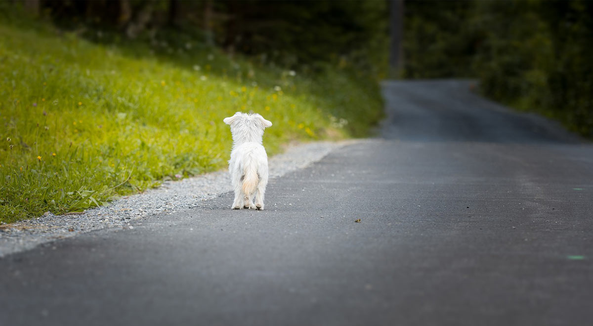 """Breve lettera ad ogni """"umano"""" che abbandona i cani per strada"""